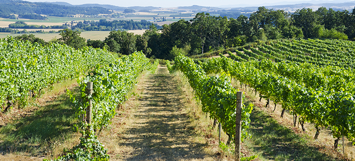Wineries in Willamette Valley