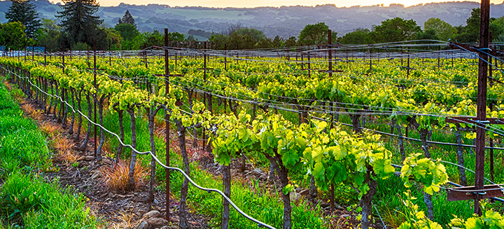 Sonoma Coast Wineries