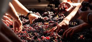 DISCOVERING ITALIAN TRADITIONS WITH WINE―TAKING TRADITIONS IN WINEMAKING WITH MODERN AGE
