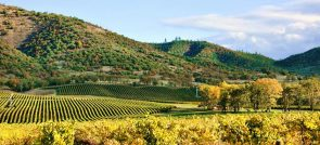 5 TIPS FOR A NAPA VALLEY VACATION
