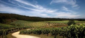 THE BEST WINERIES TO VISIT