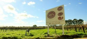 KIES FAMILY WINES AND THE BAROSSA VALLEY