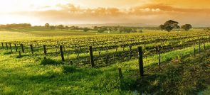 NAPA VALLEY: THE WORLD FAMOUS WINE GROWING REGION
