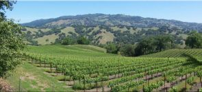 REDWOOD VALLEY WINERIES