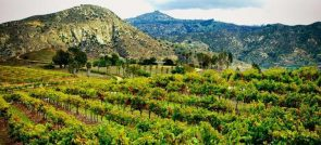 SAN PASQUAL VALLEY WINERIES