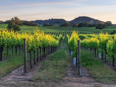 BEST CHALK HILL WINERIES