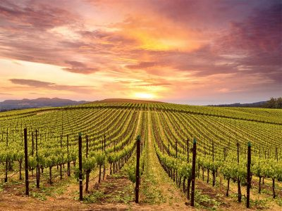 WHICH WINERIES HAVE FREE WINE TASTING IN NAPA VALLEY
