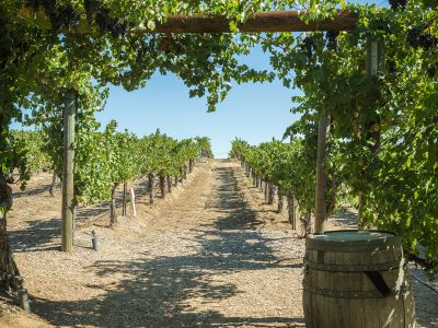 TEMECULA WINERIES
