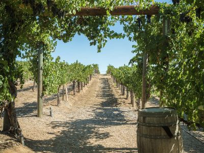 COMPILE YOUR OWN, SELF-GUIDED WINE TASTING TOUR IN TEMECULA