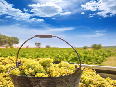 INTERESTING FACTS ABOUT CHARDONNAY WINE