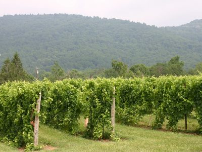 CHARLOTTESVILLE WINERIES