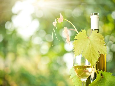 BEST DRY WHITE WINE FOR NOVICE WINE DRINKERS