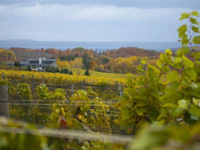 TOP WINERIES FOR WINE TASTING IN MICHIGAN