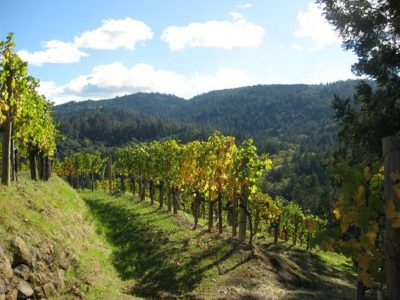 DIAMOND MOUNTAIN WINERIES