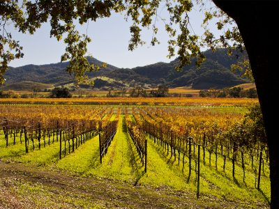 OAK KNOLL WINERIES