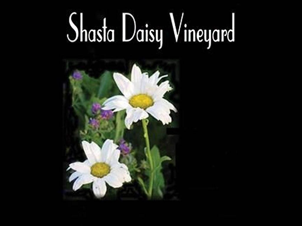 Shasta Daisy Vineyard