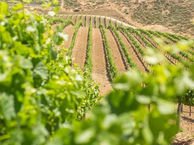 WINERIES OF TEMECULA CALIFORNIA