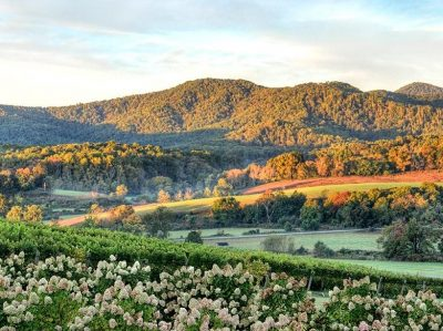 OUR FAVORITE VIRGINIA WINE COUNTRY TOUR