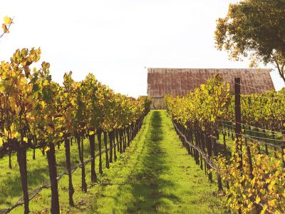 OUR FAVORITE SONOMA COUNTY WINE TOURS