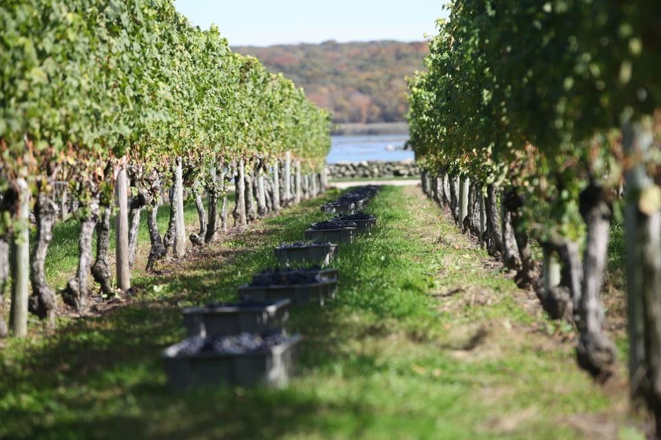 Sakonnet Winery Rhode Island