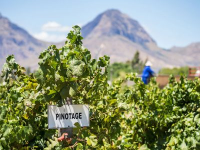 PINOTAGE: AN OVERVIEW