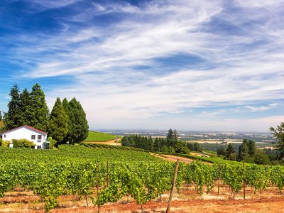 WHAT ARE THE TOP WINE TOURS IN OREGON?