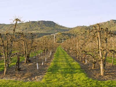 A BRIEF OVERVIEW OF THE ROGUE VALLEY AVA IN OREGON