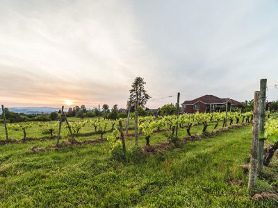 OREGON TERROIR: HOW IT AFFECTS WINE