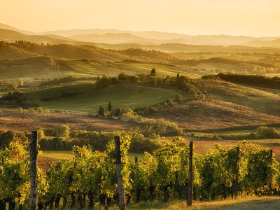 WHAT IS A SUPER TUSCAN?