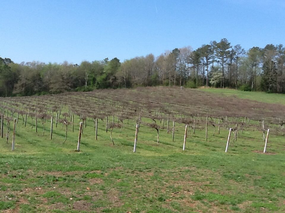 Wills Creek Vineyard