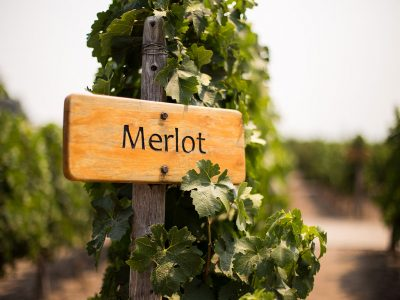 MERLOT WINE - ESSENCE, HISTORY, AND FOOD TO PAIR WITH