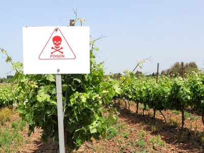 COMMON VINEYARD PESTS AND DISEASES AND HOW TO TREAT THEM