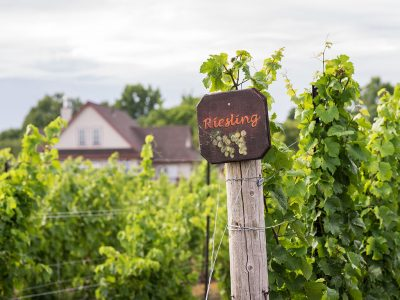 RIESLING WINE & WINERIES