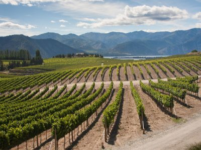 THE BEST WASHINGTON WINERIES TO VISIT IN THE SUMMER