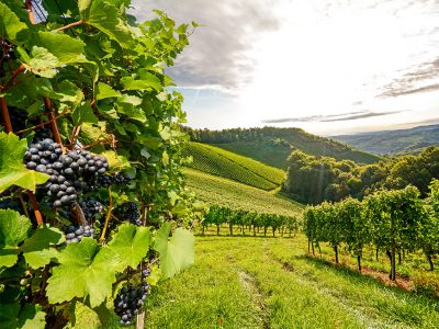 5 REGIONS FOR INEXPENSIVE, BUT GREAT WINE