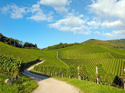 PLAN YOUR NEXT TRIP TO WINE COUNTRY! THE BEST WINE TRAILS IN THE US