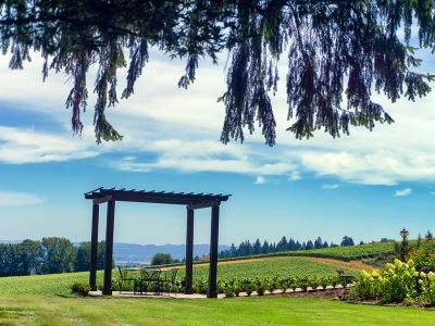 OREGON VINEYARDS & WINERIES