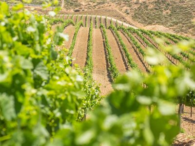 WINERIES IN TEMECULA CA