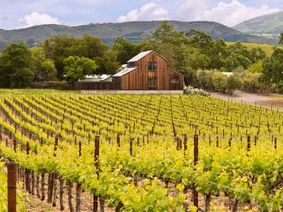 WINE TASTING IN NAPA: MIXING PLEASURE WITH WORK