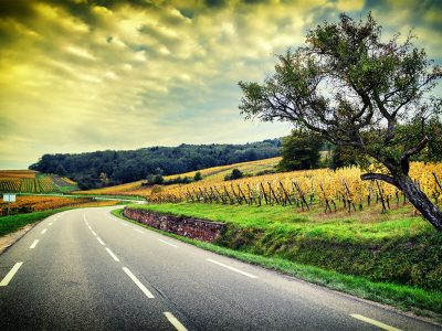 WHAT YOU NEED TO KNOW ABOUT WINE COUNTRY WINERIES