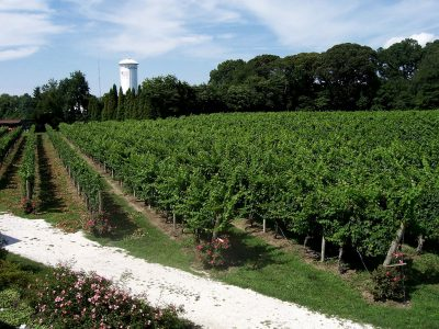 NEW JERSEY'S BEST WINERIES AND VINEYARDS