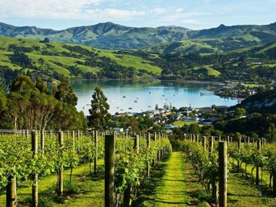 NEW ZEALAND WINE AND WINERIES