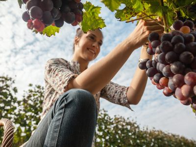 HOW TO FIND THE BEST WINERIES IN YOUR AREA