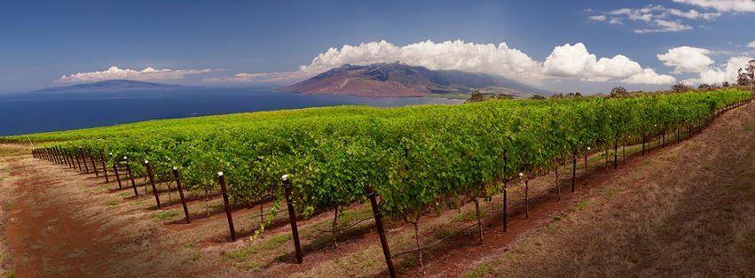 Maui's Winery, United States, Hawaii, Ulupalakua | Kazzit US ...