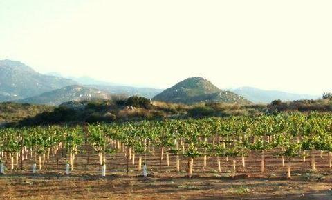 Hellanback Ranch Vineyard, United States, California, Ramona
