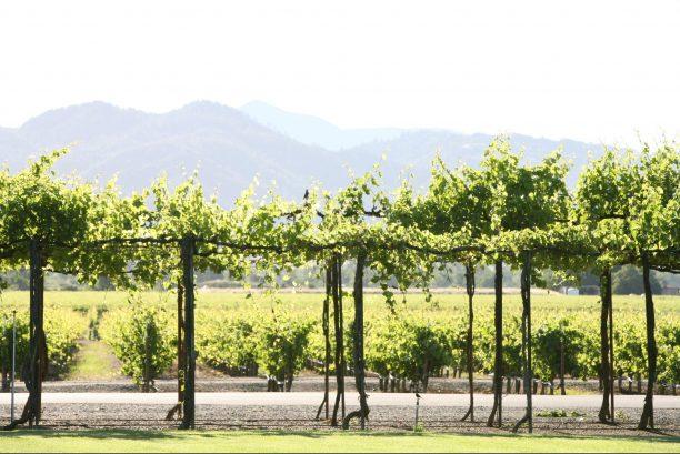 Trentadue Winery United States California Geyserville