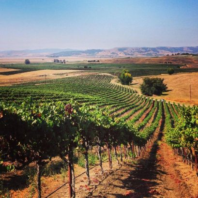 francis ford coppola winery, united states, california, geyserville