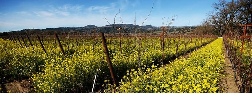 La Crema Winery United States California Healdsburg
