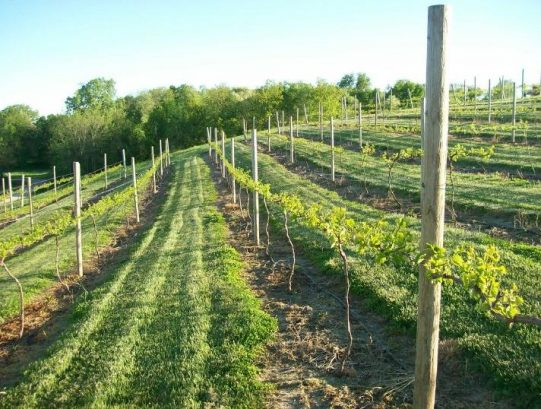 Wineries near galesburg il
