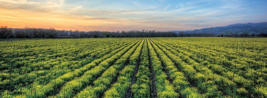 Rodney Strong Vineyards United States California